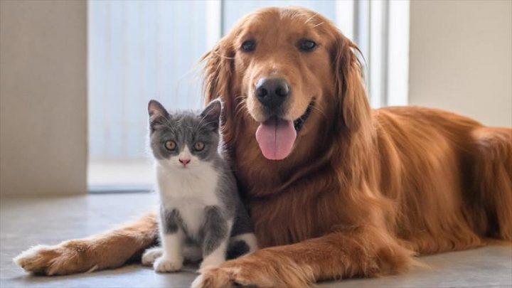 Pueden mascotas reducir estrés con musicoterapia