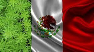 ONU. Preocupada por los Planes de Legalización de la Cannabis en México